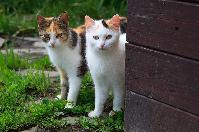 two pretty cats looking around the corner